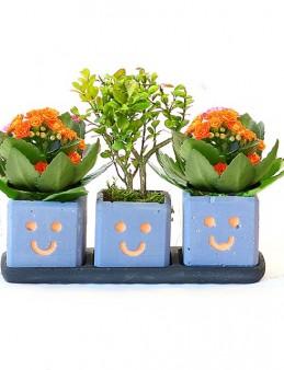 Üçlü Gülümseme Seti  çiçek gönder