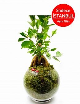 Asil Bonsai (Yapay)  çiçek gönder