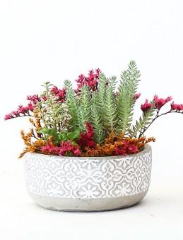 Beton Saksıda Sedum Bahçesi  çiçek gönder