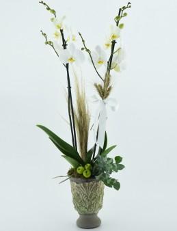 Özel Kadeh Vazoda İkili Beyaz Orkide  çiçek gönder