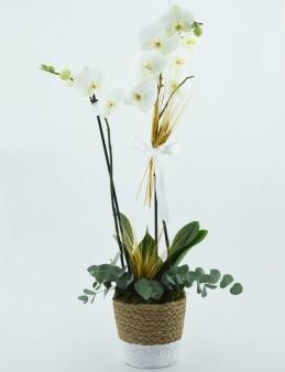 Sepet Desenli Seremikte  Beyaz Orkide  çiçek gönder