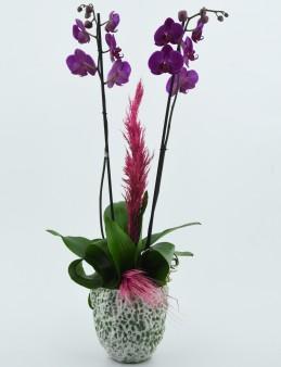 Özel Tasarım Vazoda İkili Mor Orkide  çiçek gönder