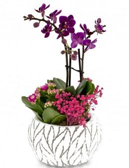 Yaprak Desenli Seramikte Mini orkide  çiçek gönder