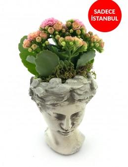 Helen de Kalanchoe Bitkisi  çiçek gönder