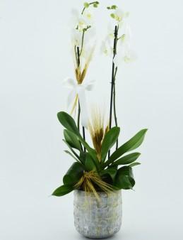 Beyaz Orkide Serisi  çiçek gönder