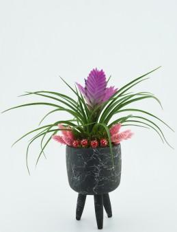 Üç Ayaklı Seramikte Tillandsia Bitkisi  çiçek gönder