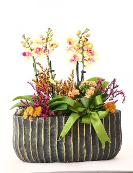 Dekoratif Saksıda Orkide Bahçesi Orkideler çiçek gönder