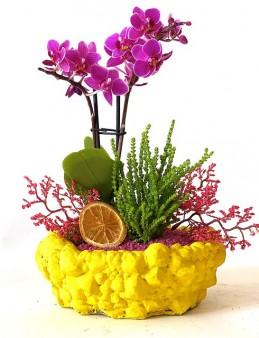 Minyatür Orkide Bahçesi  çiçek gönder