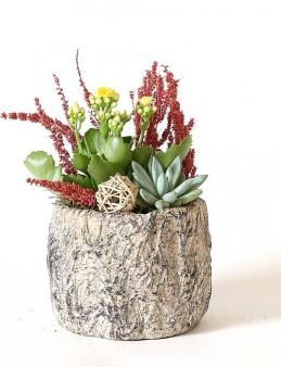 Özel Tasarım Saksıda Echeveria Ve Kalanchoe  çiçek gönder