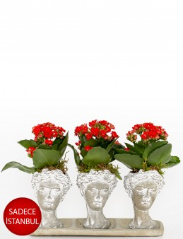 Trio Serisi Helen de Kalanchoe   çiçek gönder