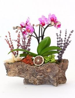 Tasarım Harikası Saksısında Orkide Ve Sukulent Terarium çiçek gönder