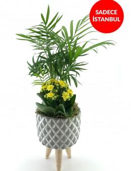 Üç Ayaklı Tasarım Vazoda Şık Areka Bitkisi  çiçek gönder