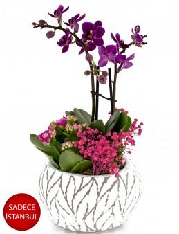 Yaprak Desenli Seramikte Mini orkide Orkideler çiçek gönder