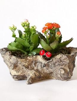 Eskitme Saksıda Kalanchoeler  çiçek gönder
