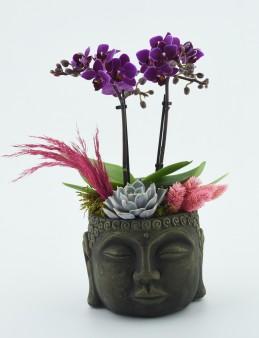 Mini Orkide Çiçeği  çiçek gönder