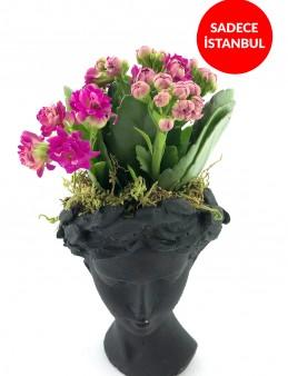 Siyah Helen de Kalanchoe Bitkisi  çiçek gönder