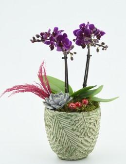 Minyatür Orkide Tasarımı  çiçek gönder