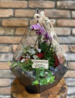 Geometrik Camda Mini Orkide  çiçek gönder