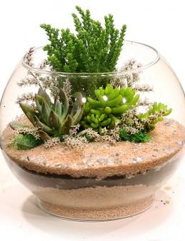 Çöl Görünümlü Teraryum Bahçesi  çiçek gönder