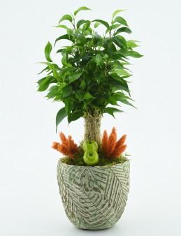Özel Tasarım Minyatür Süs Bitkisi  çiçek gönder