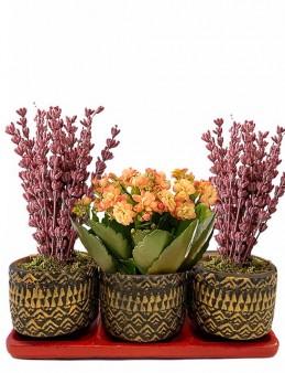 Üçlü Beton Saksıda Kalanchoe ve Lavanta  çiçek gönder