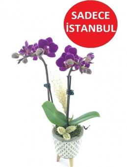3 Ayaklı Seramikte Mini Orkide  çiçek gönder