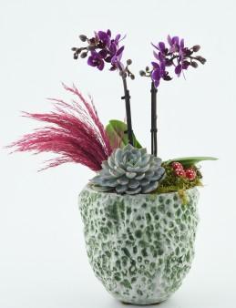 Özel Tasarım Minyatür Orkidesi  çiçek gönder