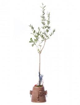 Arati Serisi Zeytin Ağacı Tasarım  çiçek gönder