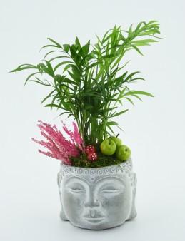 Mini Areka Bitkisi  çiçek gönder