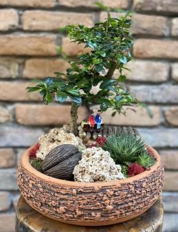 Bonsai Zelkova Tasarım  çiçek gönder