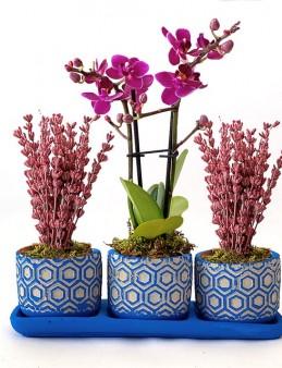 Üçlü Beton Saksıda Orkide ve Lavanta  çiçek gönder