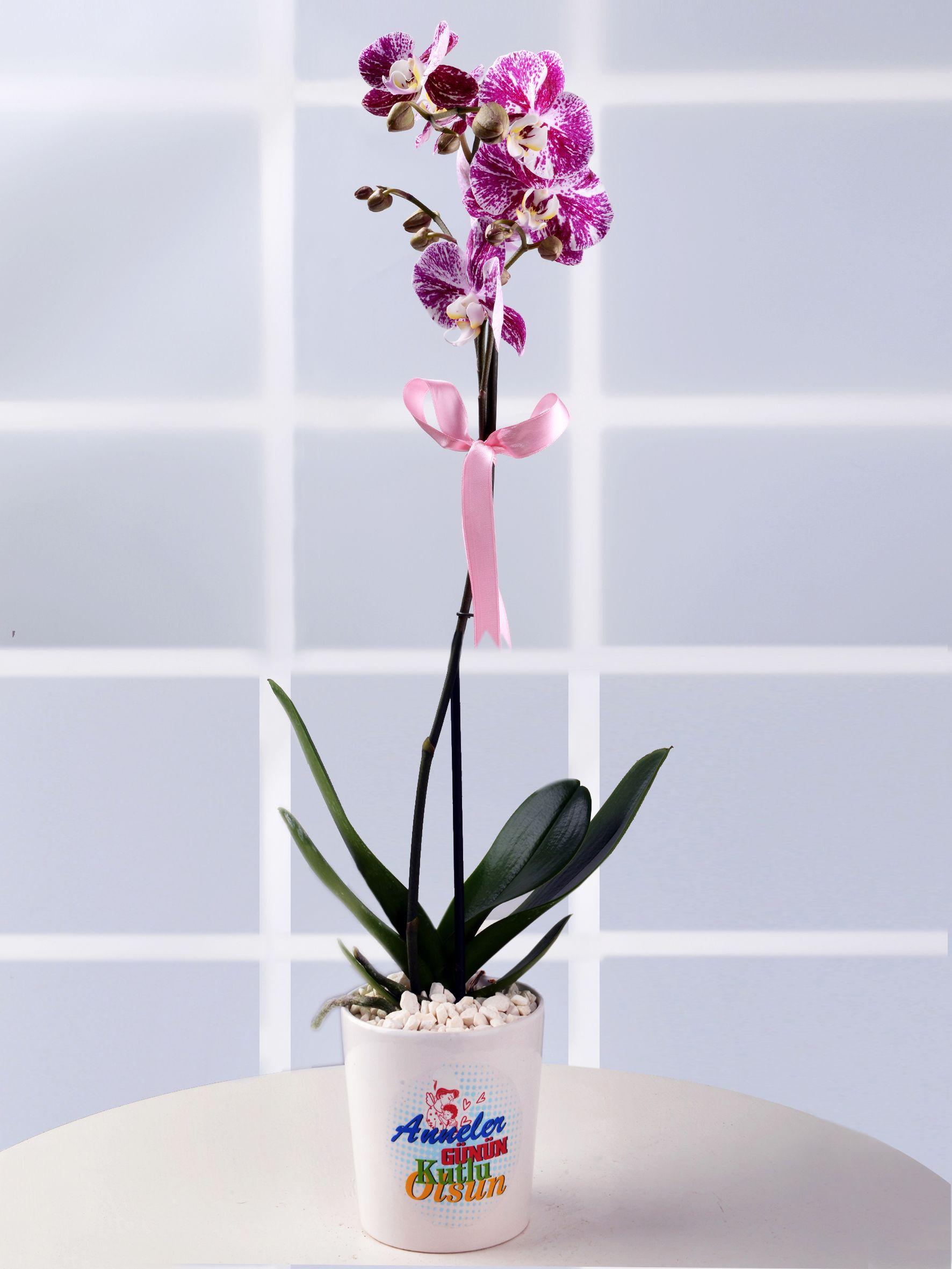 Anneler Gününe Özel Pembe Orkide  Orkideler çiçek gönder
