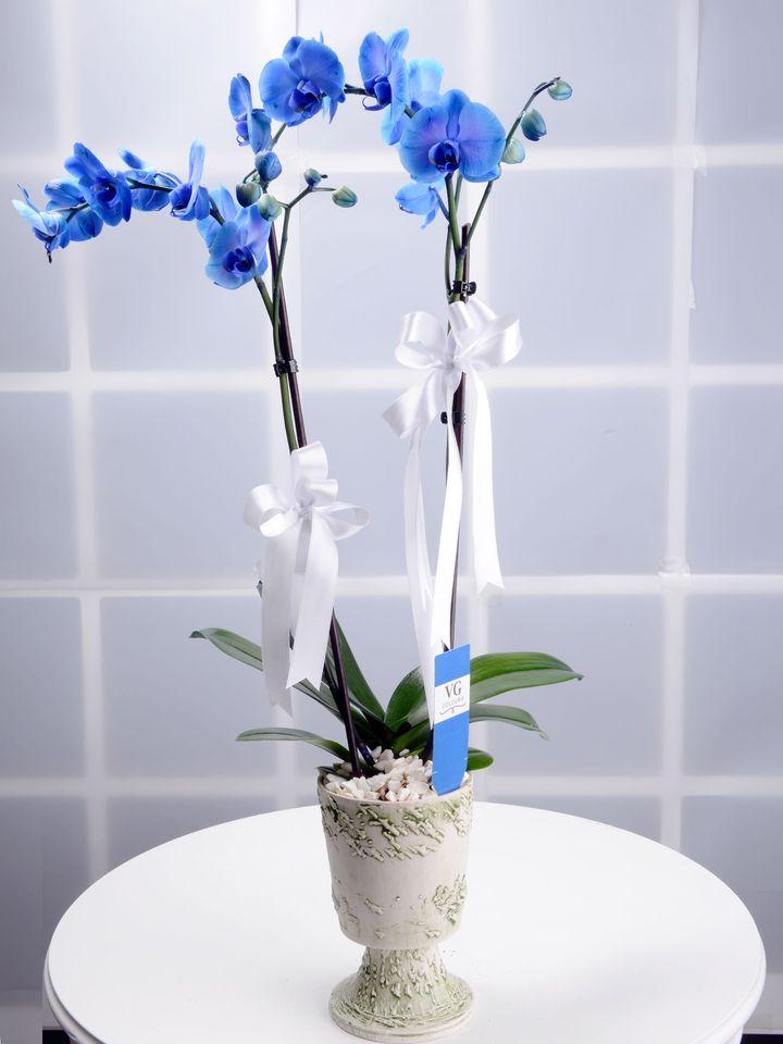 Hayalperest Mavi Orkide Çiçeği  çiçek gönder