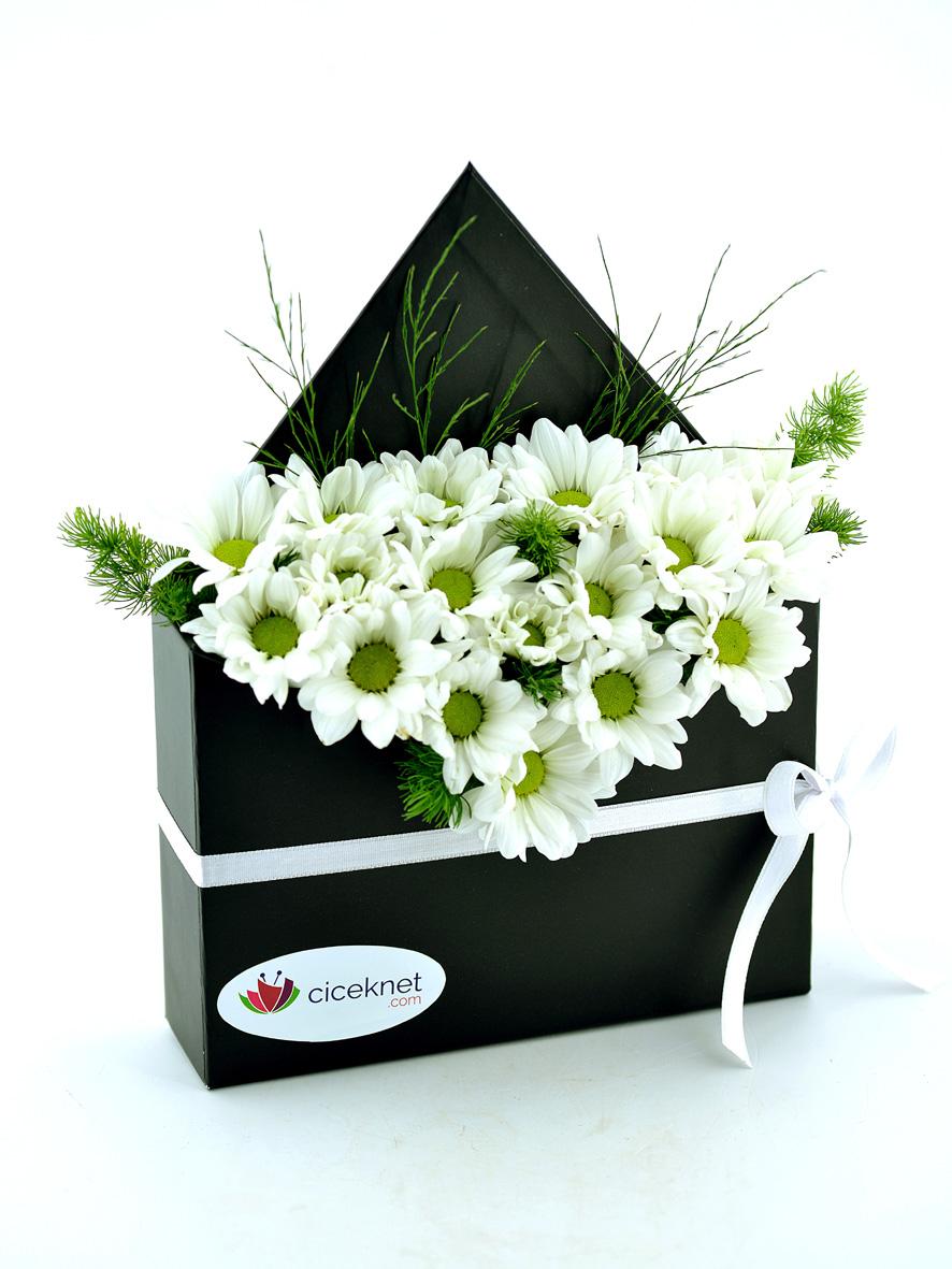 Zarf Dolusu Papatya Bahçesi  çiçek gönder