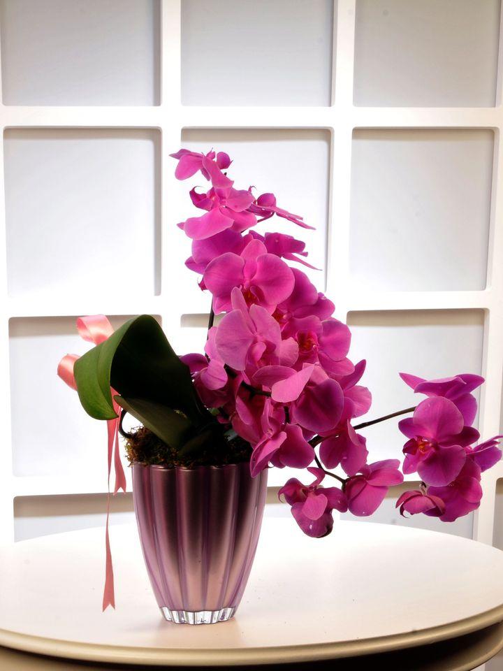 Fuşya Meander Sarmaşık Orkide Çiçeği  çiçek gönder