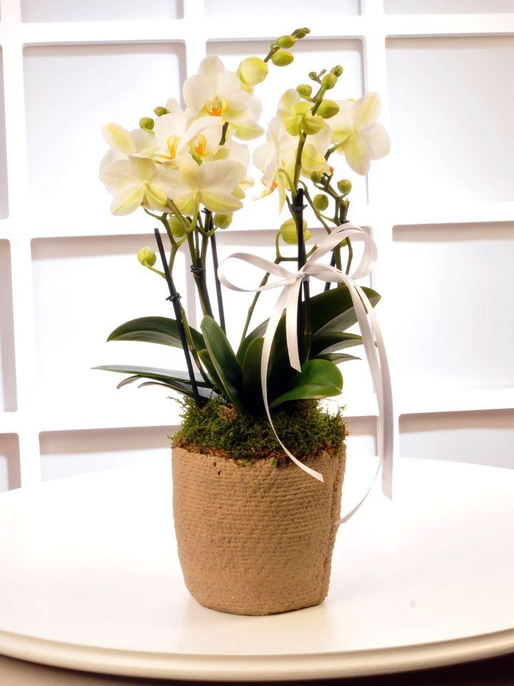 Buogetto Beyaz Orkide  çiçek gönder