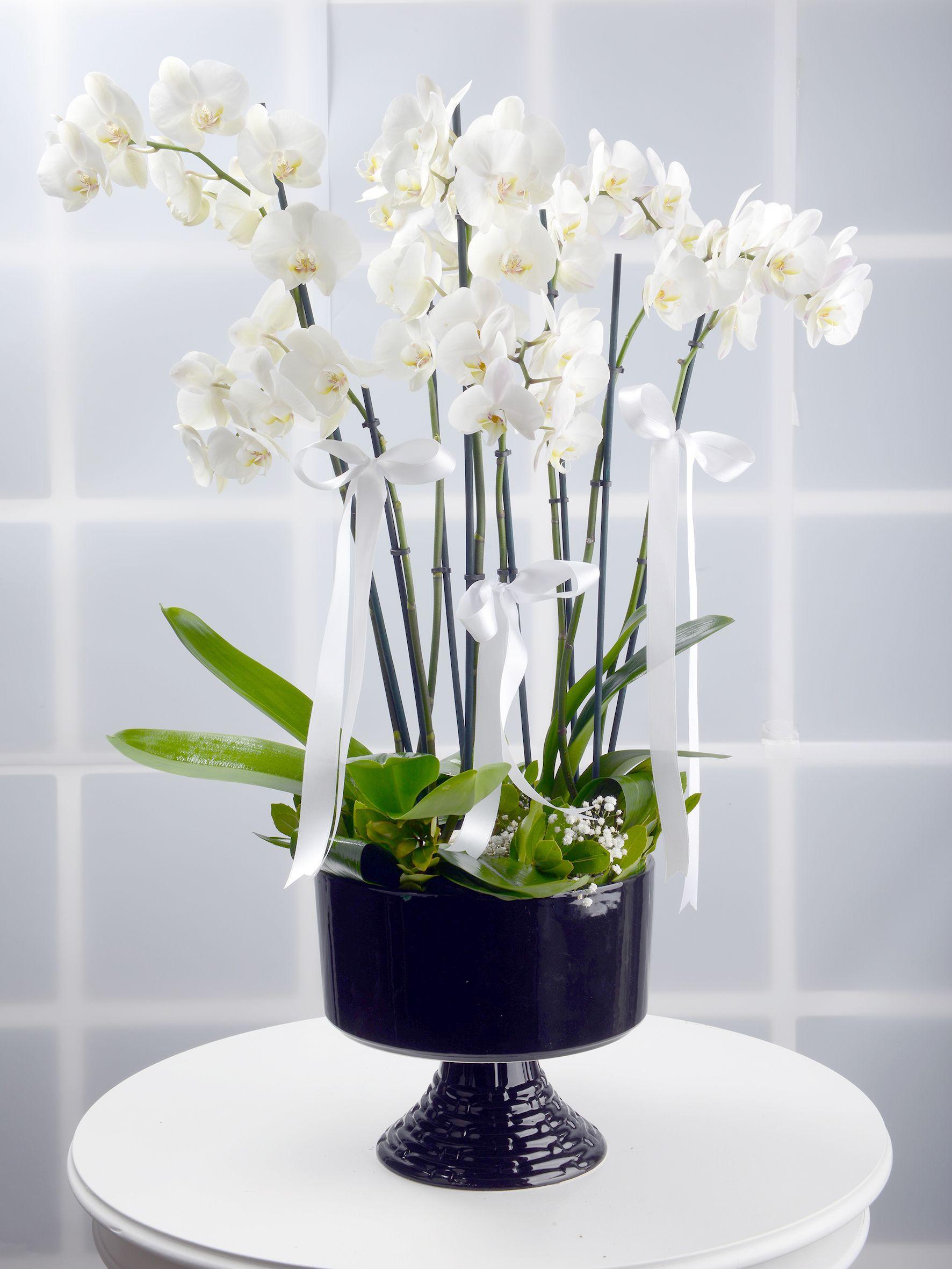 8 Dallı Beyaz Orkide Çiçeği. Orkideler çiçek gönder