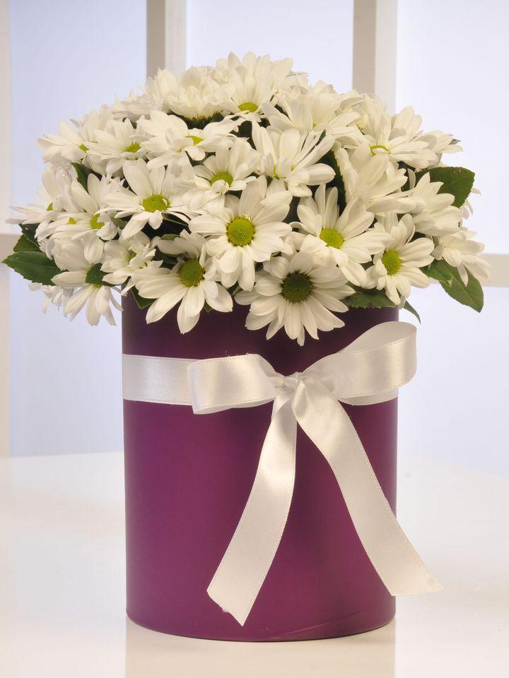 Papatya Güzeli  çiçek gönder