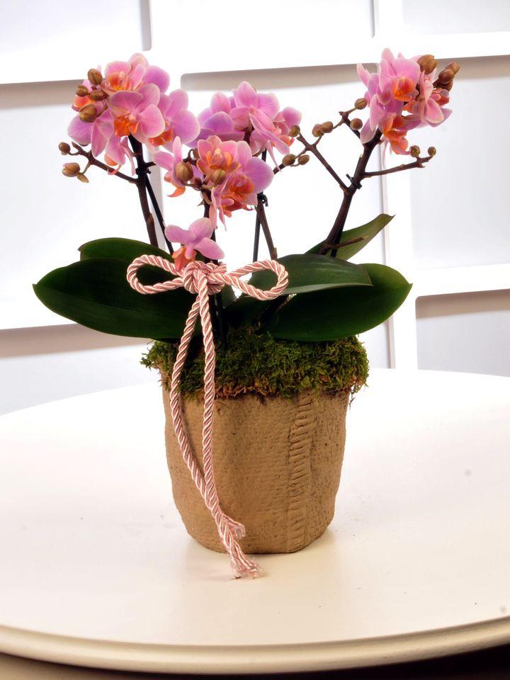 Pembe Bougetto Orkide  çiçek gönder