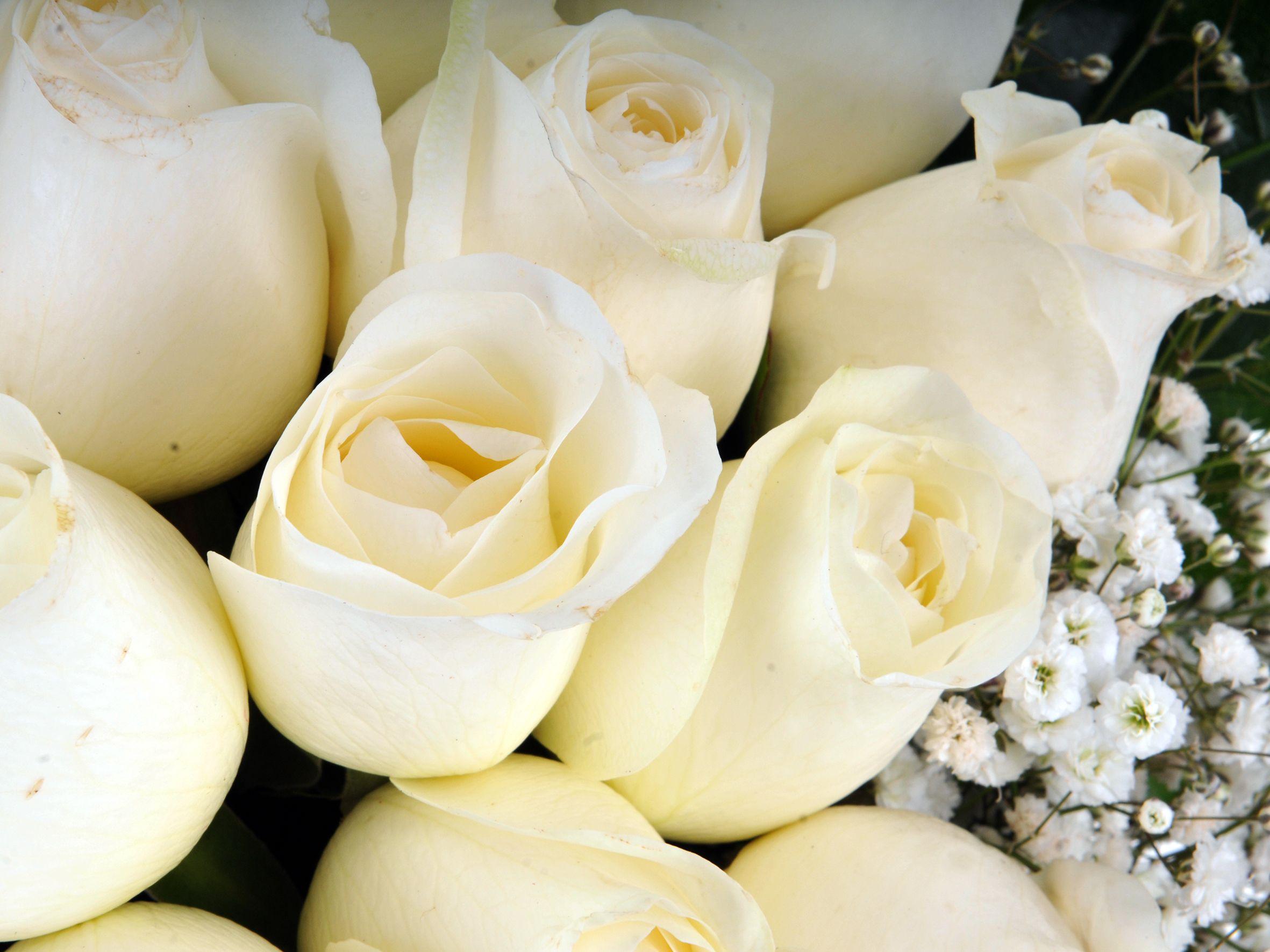 Vazoda 21 Beyaz Gül Aranjmanlar çiçek gönder