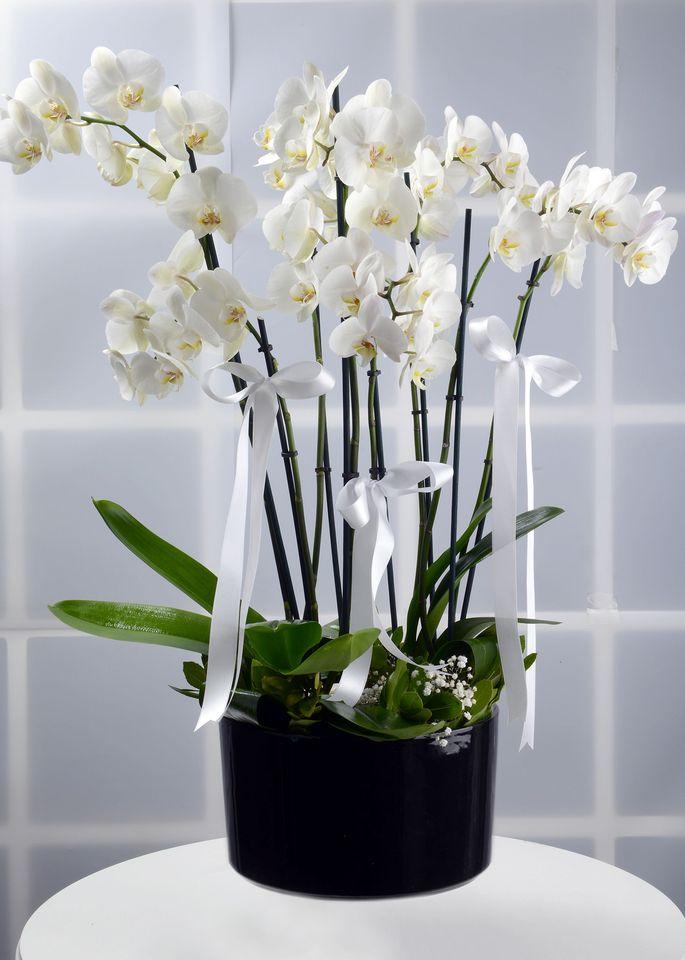Bir Dünya Mutluluk, 8 Dallı Orkide Çiçeği  çiçek gönder