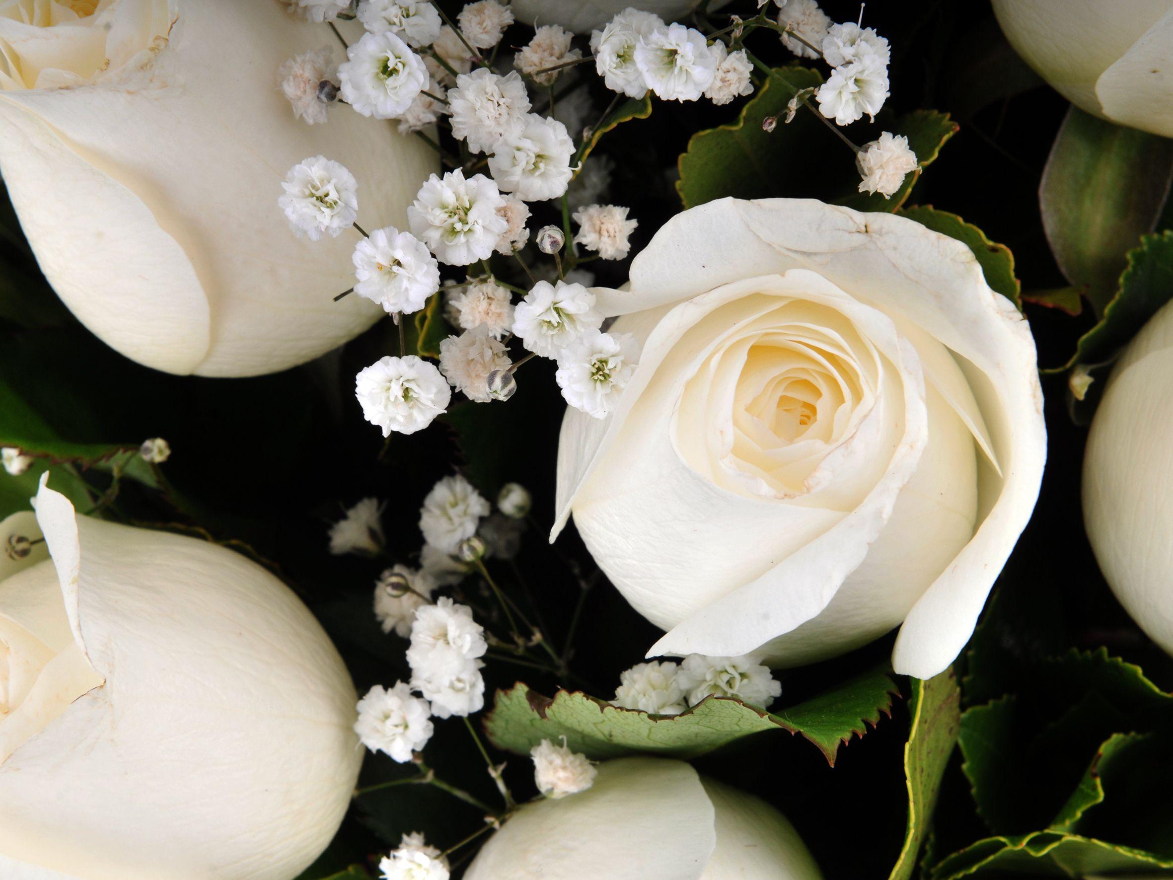Vazoda 21 Beyaz Gül Aranjmanı Aranjmanlar çiçek gönder