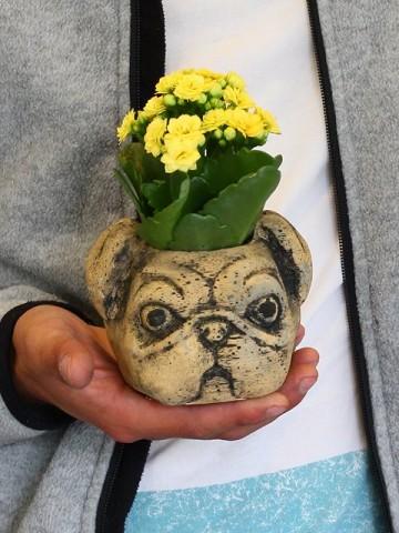 Pug Kalanchoe  Saksı Çiçekleri çiçek gönder