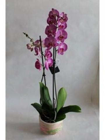 Ebru sanatı ile süslenmiş Beton Saksıda 2 Dal Pinky Orkide Orkideler çiçek gönder