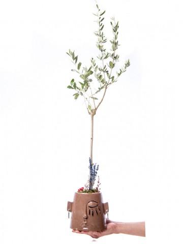 Arati Serisi Zeytin Ağacı Tasarım Saksı Çiçekleri çiçek gönder