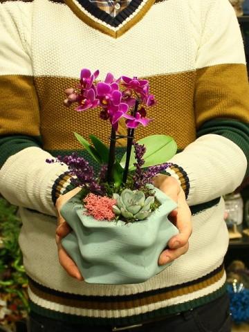 Wave Saksıda Orkide ve Sukulent Orkideler çiçek gönder