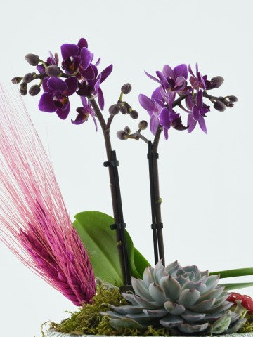 Özel Tasarım Üç Ayaklı Vazoda Minyatür Orkide Orkideler çiçek gönder
