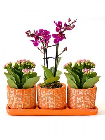 Özel Tasarım Kalanchoe ve Orkide Bitkisi Orkideler çiçek gönder