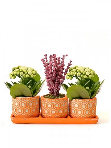 Özel Tasarım 3'lü Set  Saksı Çiçekleri çiçek gönder