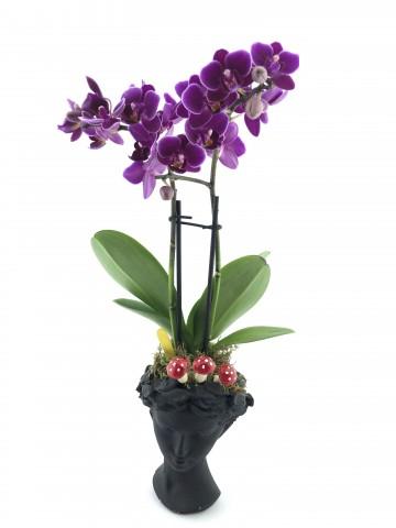 Helen Vazoda İki Dal Mor Orkide Orkideler çiçek gönder